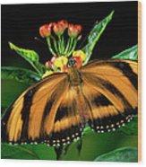 Butterfly Dryadula Heliconius Feeding Wood Print