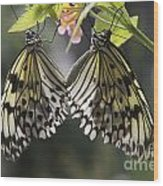 Butterfly Duo Wood Print