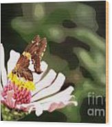 Butterfly Flower Wood Print