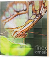 Butterfly Frosted Glass Wood Print