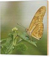 Butterfly Garden, Calgary Zoo, Calgary Wood Print
