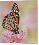 Butterfly Garden IIi Wood Print