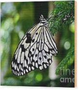 Butterfly II Wood Print