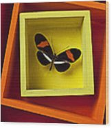 Butterfly In Box Wood Print