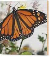 Butterfly In October Wood Print