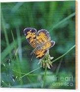 Butterfly In Square  Wood Print