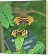 Butterfly Lovers Wood Print