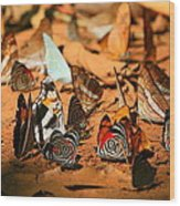 Butterfly Menagerie Wood Print