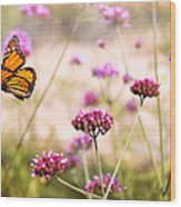 Butterfly - Monarach - The Sweet Life Wood Print