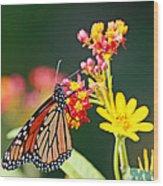 Butterfly Monarch On Lantana Flower Wood Print