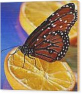 Butterfly Nectar Wood Print