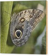 Butterfly On A Green Branch Niagara Wood Print