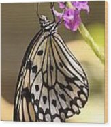 Butterfly On A Stem Wood Print