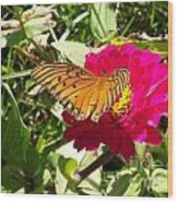 Butterfly On A Zinnia Wood Print