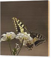 Butterfly On Blossom Flowers Wood Print