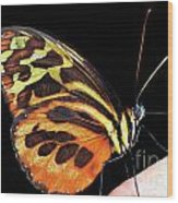 Butterfly On Finger Wood Print