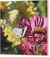 Butterfly On Flower Wood Print