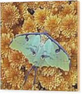 Butterfly On Flowers Wood Print