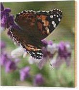 Butterfly On Lavender II Wood Print