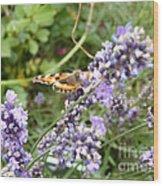 Butterfly On Lavendula Wood Print