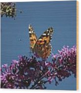Butterfly On Lilac 2 Wood Print