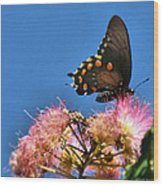 Butterfly On Mimosa Blossom Wood Print