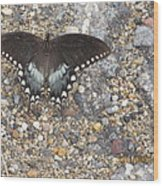 Butterfly On My Hike Route Wood Print