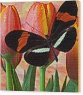 Butterfly On Orange Tulip Wood Print by Garry Gay