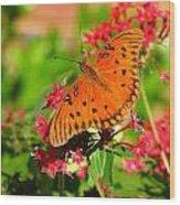 Butterfly On Pentas Wood Print