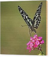 Butterfly On Pink Flower  Wood Print