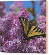 Butterfly On Pink Lilac Wood Print