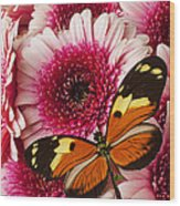 Butterfly On Pink Mum Wood Print