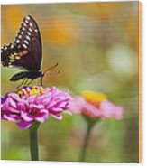 Butterfly On Pink Zinnia Wood Print