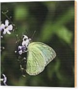 Butterfly On Purple Flower Wood Print