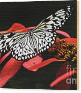 Butterfly On Red Wood Print