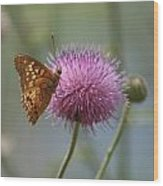 Butterfly On The Bloom Wood Print