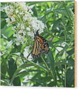 Butterfly On The Butterfly Bush Wood Print