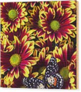 Butterfly On Yellow Red Daises  Wood Print