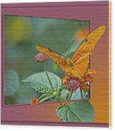 Butterfly Orange 16 By 20 Wood Print