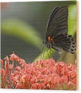 Butterfly Papilio Memnon Feeding Wood Print