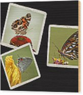 Butterfly Picture Page Collage Wood Print