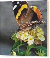 Butterfly Sipping Lantana Luscious Lemonade   Wood Print