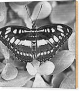 Butterfly Study #0061 Wood Print by Floyd Menezes
