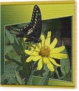 Butterfly Swallowtail 01 16 By 20 Wood Print