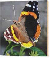 Butterfly Tai Chi On Lantana Luscious Lemonade Wood Print