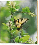 Butterfly Tiger Swallow Wood Print