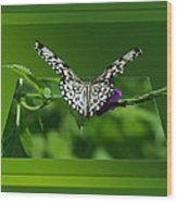 Butterfly White 16 By 20 Wood Print