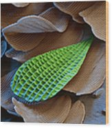 Butterfly Wing Scale Sem Wood Print