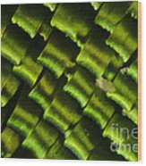 Butterfly Wing Scales Wood Print