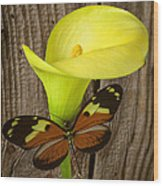 Butterfly With Calla Lily Wood Print